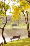 Ξύλινος πάγκος κάτω από το δέντρο Στοκ Φωτογραφία