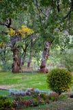 Ξύλινος πάγκος στη μέση ενός κήπου στοκ φωτογραφίες
