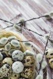 Ξύλινος πίνακας αυγών ορτυκιών υποβάθρου Πάσχας catkins Στοκ φωτογραφία με δικαίωμα ελεύθερης χρήσης
