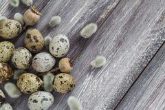 Ξύλινος πίνακας αυγών ορτυκιών υποβάθρου Πάσχας catkins Στοκ εικόνες με δικαίωμα ελεύθερης χρήσης