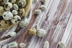 Ξύλινος πίνακας αυγών ορτυκιών υποβάθρου Πάσχας catkins Στοκ φωτογραφίες με δικαίωμα ελεύθερης χρήσης
