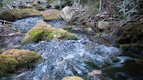 Ξύλινος ποταμός το καλοκαίρι φιλμ μικρού μήκους