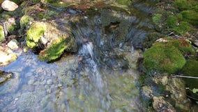 Ξύλινος ποταμός το καλοκαίρι απόθεμα βίντεο