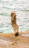 Ξύλινος πόλος στην παραλία Στοκ φωτογραφία με δικαίωμα ελεύθερης χρήσης
