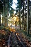 Ξύλινος σωρός στα ξύλα Στοκ εικόνες με δικαίωμα ελεύθερης χρήσης