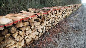Ξύλινος σωρός στο ξύλο Στοκ Εικόνες