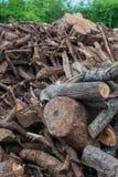 Ξύλινος σωρός του κλάδου δέντρων Στοκ φωτογραφίες με δικαίωμα ελεύθερης χρήσης