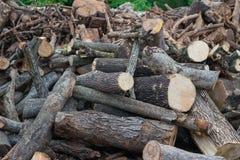 Ξύλινος σωρός του κλάδου δέντρων Στοκ φωτογραφία με δικαίωμα ελεύθερης χρήσης