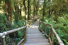 Ξύλινος τρόπος σκαλοπατιών στη ζούγκλα μεταξύ του όμορφου πράσινου υποβάθρου φυλλώματος Στοκ φωτογραφία με δικαίωμα ελεύθερης χρήσης