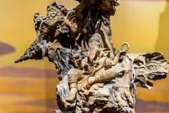 Ξύλινος χαράζοντας επικεφαλής Θεός ελεφάντων Στοκ φωτογραφίες με δικαίωμα ελεύθερης χρήσης