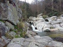 Ξύλινο δάσος Στοκ Φωτογραφίες