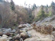 Ξύλινο δάσος Στοκ φωτογραφία με δικαίωμα ελεύθερης χρήσης