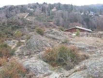 Ξύλινο δάσος Στοκ φωτογραφίες με δικαίωμα ελεύθερης χρήσης