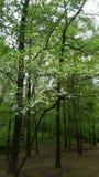 Ξύλινο δέντρο σκυλιών στοκ εικόνα