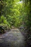 Ξύλινο ελαφρύ κτύπημα στις Άλπεις Itlain στοκ εικόνα με δικαίωμα ελεύθερης χρήσης