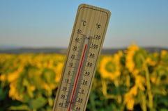 Ξύλινο θερμόμετρο υδραργύρου Στοκ Εικόνες