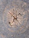 Ξύλινο κείμενο Στοκ Εικόνες