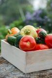 Ξύλινο κιβώτιο με τα φρέσκα λαχανικά (ντομάτα, αγγούρι, πιπέρι κουδουνιών) Στοκ Εικόνα