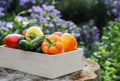 Ξύλινο κιβώτιο με τα φρέσκα λαχανικά (ντομάτα, αγγούρι, πιπέρι κουδουνιών) Στοκ φωτογραφίες με δικαίωμα ελεύθερης χρήσης