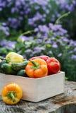 Ξύλινο κιβώτιο με τα φρέσκα λαχανικά (ντομάτα, αγγούρι, πιπέρι κουδουνιών) Στοκ φωτογραφία με δικαίωμα ελεύθερης χρήσης