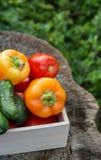 Ξύλινο κιβώτιο με τα φρέσκα λαχανικά (ντομάτα, αγγούρι, πιπέρι κουδουνιών) Στοκ Εικόνες