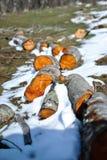 Ξύλινο κούτσουρο Στοκ φωτογραφίες με δικαίωμα ελεύθερης χρήσης