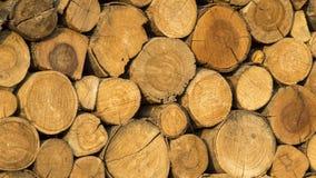 Ξύλινο κούτσουρο Στοκ φωτογραφία με δικαίωμα ελεύθερης χρήσης