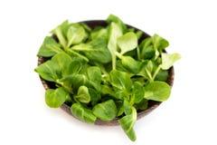 Ξύλινο κύπελλο με τα φύλλα σαλάτας καλαμποκιού Στοκ εικόνες με δικαίωμα ελεύθερης χρήσης