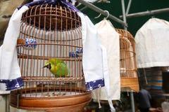 Ξύλινο κλουβί πουλιών ινδικού καλάμου με το πράσινο πουλί φύλλων Στοκ εικόνα με δικαίωμα ελεύθερης χρήσης