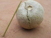 Ξύλινο μήλο Στοκ Εικόνες
