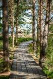 ξύλινο μονοπάτι στο έλος Στοκ εικόνες με δικαίωμα ελεύθερης χρήσης
