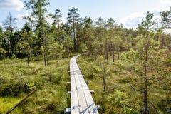ξύλινο μονοπάτι στο έλος Στοκ φωτογραφία με δικαίωμα ελεύθερης χρήσης