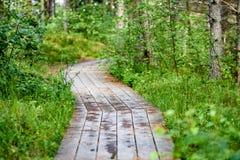 ξύλινο μονοπάτι στο έλος Στοκ Εικόνα