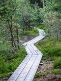 ξύλινο μονοπάτι στο έλος Στοκ εικόνα με δικαίωμα ελεύθερης χρήσης