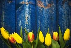 Ξύλινο μπλε λουλουδιών άνοιξη τουλιπών ανασκόπησης Στοκ φωτογραφία με δικαίωμα ελεύθερης χρήσης