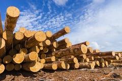 Ξύλινο δομικό υλικό ξυλείας για το υπόβαθρο και τη σύσταση ξυλεία Καλοκαίρι, μπλε ουρανός ακατέργαστος βιομηχανίες Στοκ Φωτογραφία