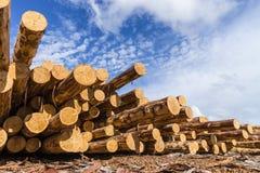 Ξύλινο δομικό υλικό ξυλείας για το υπόβαθρο και τη σύσταση ξυλεία Καλοκαίρι, μπλε ουρανός ακατέργαστος βιομηχανίες Στοκ φωτογραφία με δικαίωμα ελεύθερης χρήσης