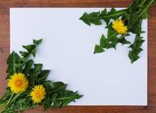 Ξύλινο πλαίσιο με τις πικραλίδες Στοκ φωτογραφίες με δικαίωμα ελεύθερης χρήσης