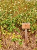 Ξύλινο σημάδι στην κοντή στήλη στον τομέα με τα χορτάρια Σημάδι των λουλουδιών που χρωματίζονται στον ξύλινο πίνακα παραδοσιακός  Στοκ φωτογραφία με δικαίωμα ελεύθερης χρήσης
