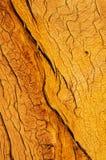 Ξύλινο σιτάρι στοκ φωτογραφίες με δικαίωμα ελεύθερης χρήσης