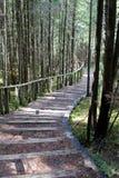 Ξύλινο σκαλοπάτι στο δάσος στοκ φωτογραφία με δικαίωμα ελεύθερης χρήσης