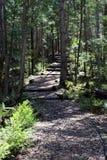 Ξύλινο σκαλοπάτι στο δάσος στοκ φωτογραφία