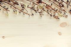 Ξύλινο υπόβαθρο άνοιξη με τους κλάδους της ιτιάς διάστημα αντιγράφων Στοκ Φωτογραφία