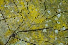 Ξύλινο υπόβαθρο κούτσουρων Στοκ Εικόνες
