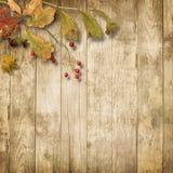 Ξύλινο υπόβαθρο με τα φύλλα και τη σορβιά φθινοπώρου στοκ φωτογραφία με δικαίωμα ελεύθερης χρήσης