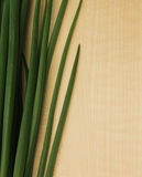 Ξύλινο υπόβαθρο με τα φύλλα κρεμμυδιών Στοκ Εικόνες