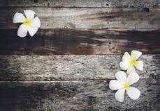 Ξύλινο υπόβαθρο με Plumeria Στοκ εικόνες με δικαίωμα ελεύθερης χρήσης