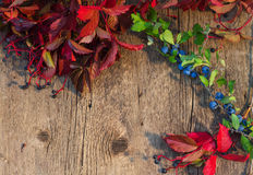 Ξύλινο υπόβαθρο που πλαισιώνεται από τα κόκκινα φύλλα και τον πράσινο κλάδο W φθινοπώρου Στοκ Εικόνα