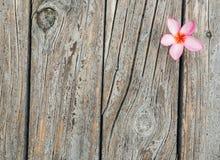 Ξύλινο υπόβαθρο σύστασης με το φρέσκο ρόδινο λουλούδι Plumeria ή Templetree Στοκ Εικόνες