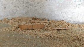 Ξύλινο υπόβαθρο σύστασης πριονιδιού στοκ εικόνες με δικαίωμα ελεύθερης χρήσης